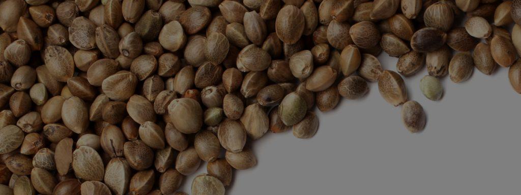 Crop King Seeds